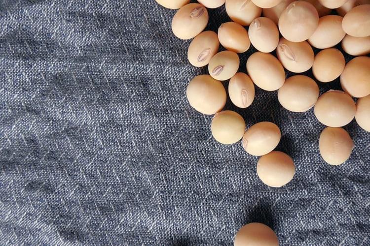 fibre de soja